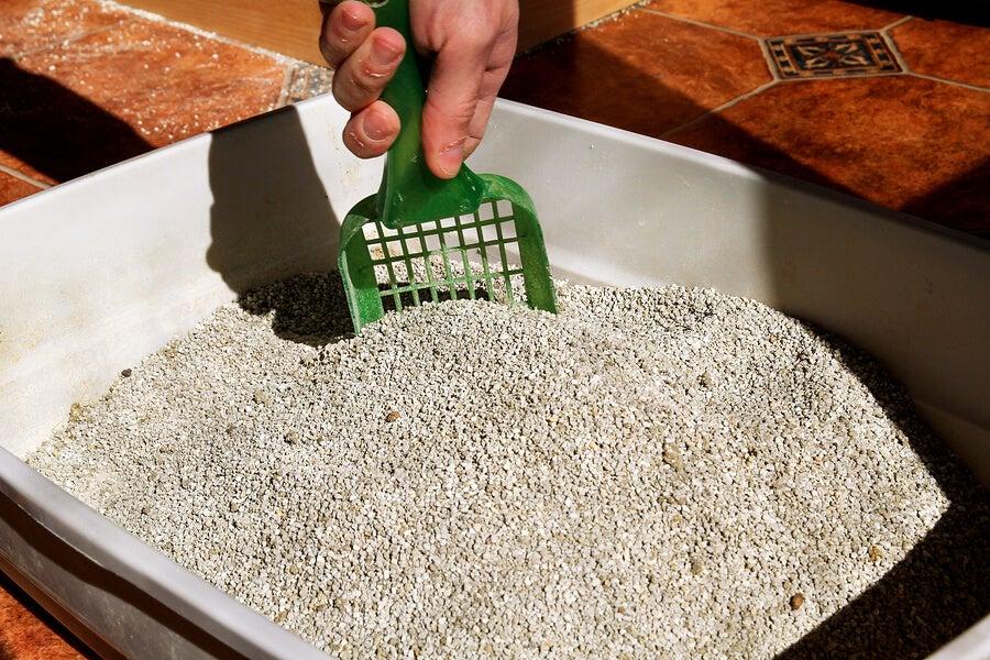 Las embarazadas deben evitar manipular la caja de arena de su gato.