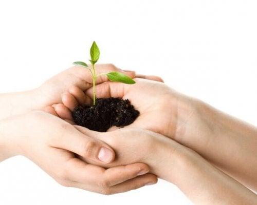 Siembra un futuro verde para tu hijo