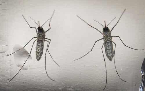 Lo que las embarazadas deben saber sobre el Virus zika