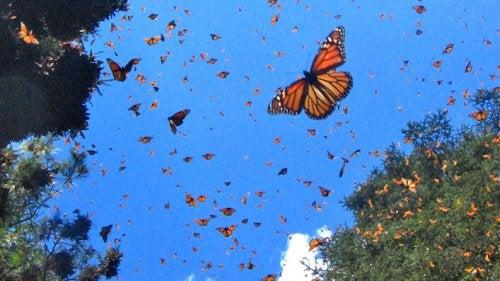 Mariposas en el cielo