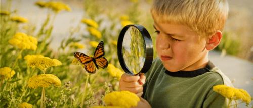 Niño viendo mariposas