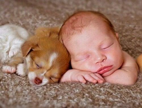 Por más tierna que parezca la escena, los especialistas no aconsejan que los recién nacidos convivan con animales en casa.