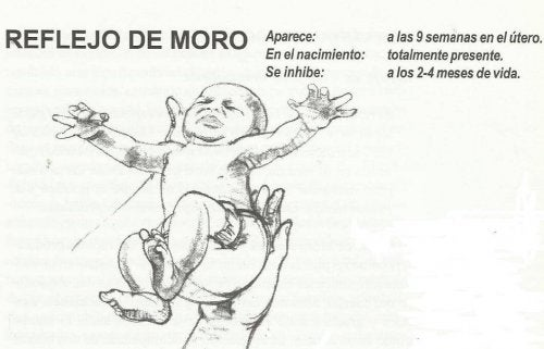 reflejo de Moro
