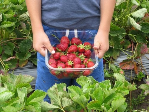 strawberries-660432_960_720