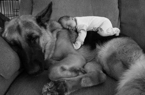 ¿Cómo tratar las alergias de los niños a las mascotas?