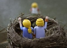 nido-vacio