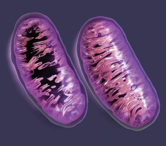 Des cellules