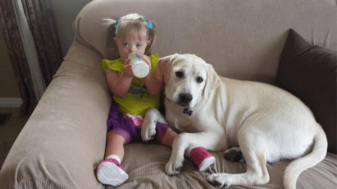 La historia de Sadie, la niña con síndrome de Down y el perro que cuida de ella