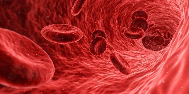 El alcohol viaja a través del torrente sanguíneo.