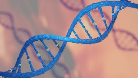 El ADN es el responsable del parecido de los bebés con respecto a sus padres y familiares.