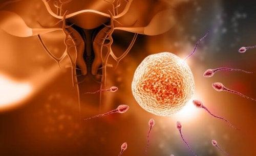 5 mitos sobre la fecundación
