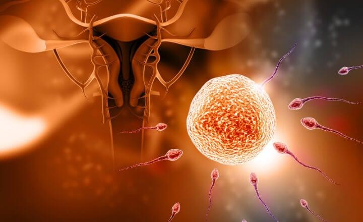 mitos sobre la fecundación 2