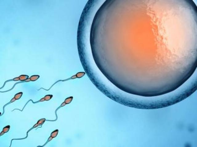mitos sobre la fecundación 1