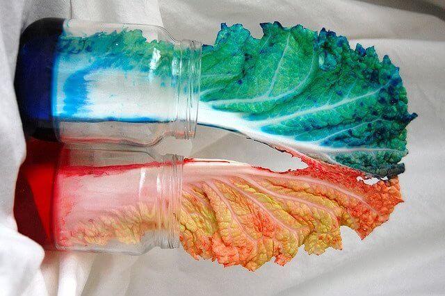 Las coles de colores teñidas con colorante vegetal.