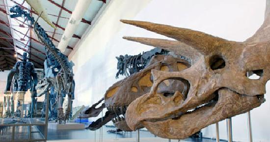 En los mejores museos para niños en Madrid hay una exhibición de animales prehistóricos.
