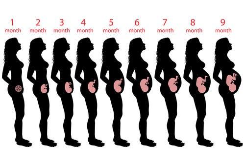 Semana 9 del embarazo