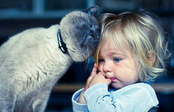 Los gatos también son una buena opción como animales para niños.