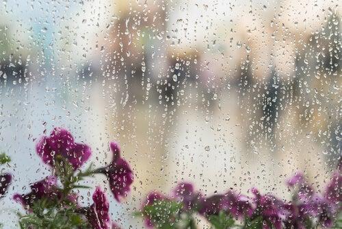 El sonido de la lluvia es un ruido blanco.