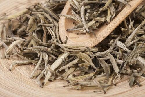 El té blanco posee una gran variedad de beneficios.