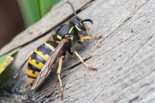 Existen diversas maneras de prevenir las picaduras de insectos en los niños.