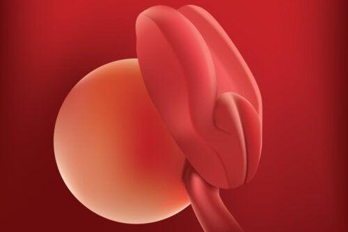 Semana 2 del embarazo: síntomas, desarrollo del bebé y recomendaciones