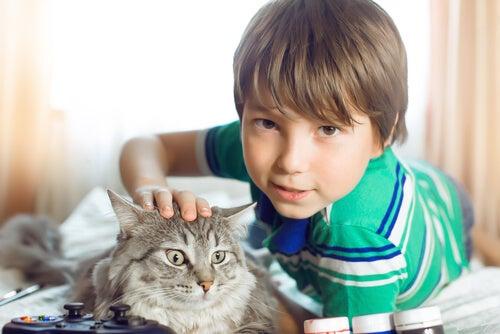 El gato es uno de los animales más amados por los niños.