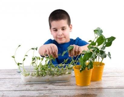 Biología para niños: 3 experimentos para hacer en casa