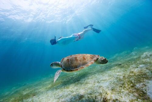 El submarinismo es un deporte para adultos y niños.