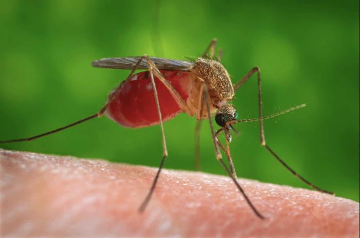¿Qué es el virus del Oeste del Nilo y cómo afecta el embarazo?