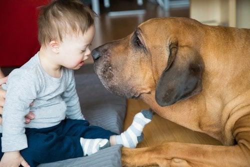 ¿Cómo pueden ayudar los animales de terapia a los niños?