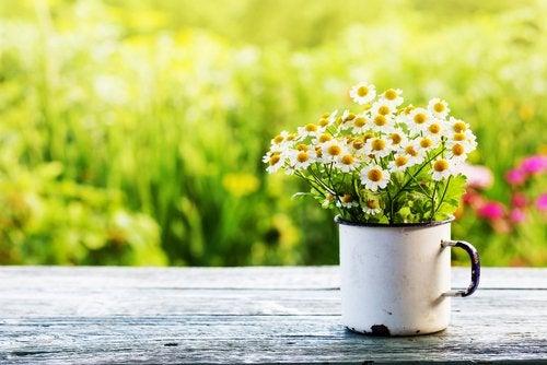La primavera altera las hormonas: es una época ideal para disfrutar y enamorarse.
