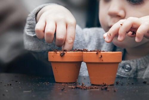 ¿Cómo hacer una planta de semillas en casa?