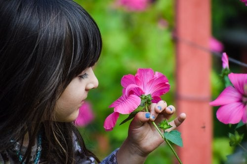 Clases de botánica para niños