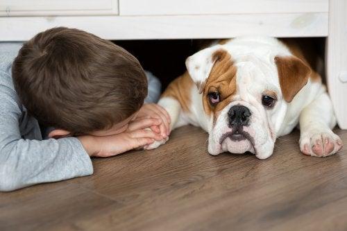 Las mordeduras de perro son comunes para los niños, por lo que hay que ser precavidos.
