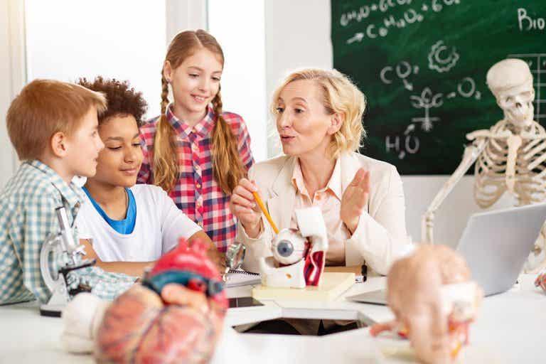 Anatomía para niños: cómo funciona su organismo