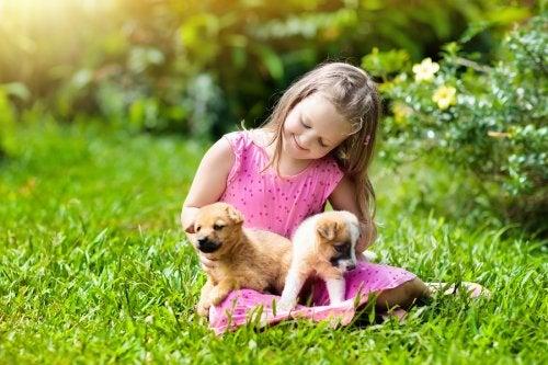 Los cachorros son una adorable mascota para los niños.