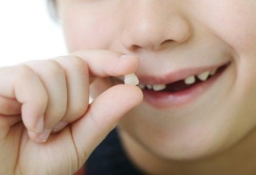 Se estima, pero no se sabe a ciencia ciertaen qué orden se caen los dientes de leche.
