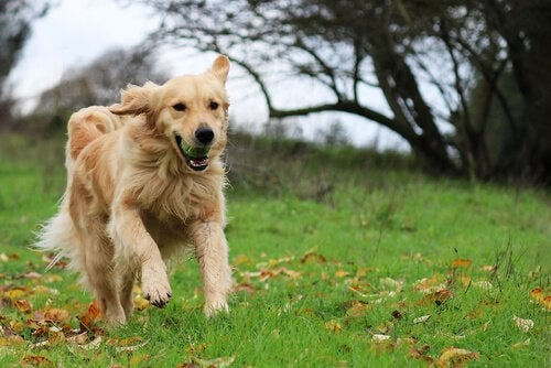 Hay algunos tipos de perros más adecuados para niños por su carácter paciente, sociable y divertido.