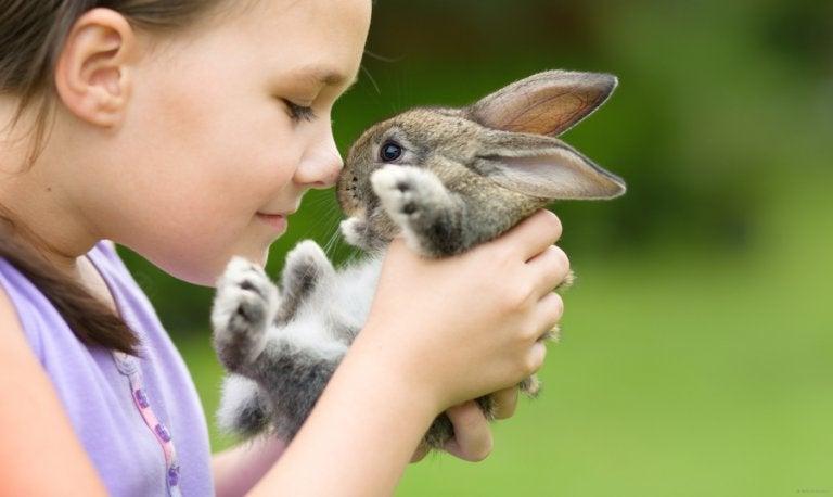 Conejo-mascotas para niños