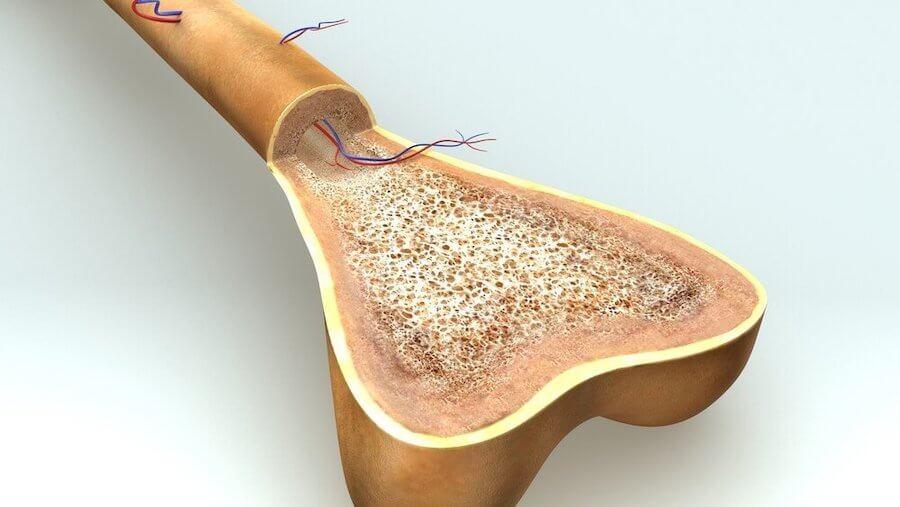 crecimiento-huesos