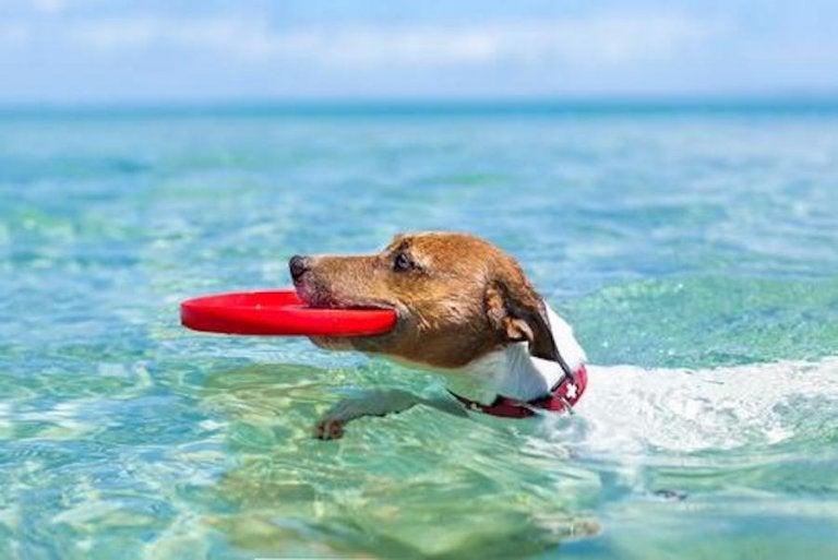 ¿Qué hacer con tu mascota cuando estás de vacaciones?
