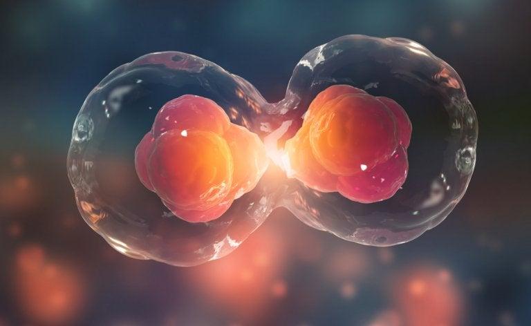 Genética para niños: ¿qué es el ciclo celular?