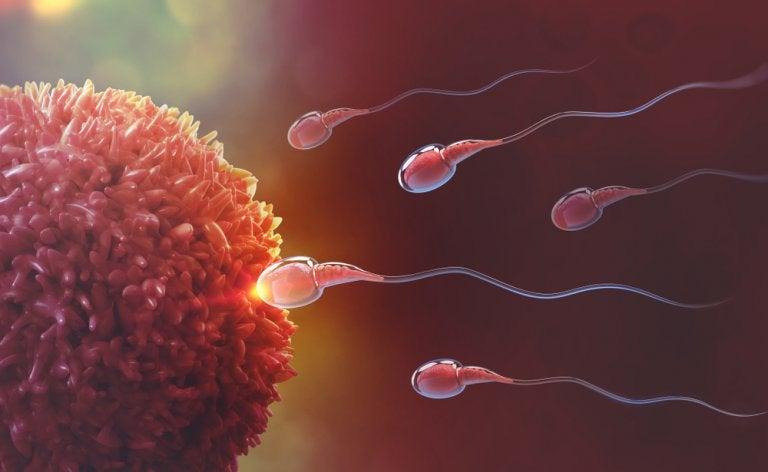 ¿Cómo se produce la fecundación? El milagro de la vida paso a paso