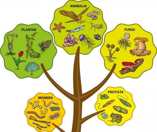 Los 5 reinos de los seres vivos para niños.