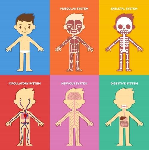 Libros para aprender sobre el cuerpo humano.