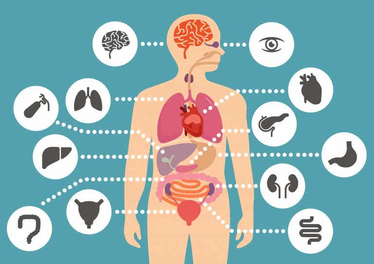 Libros para aprender sobre el cuerpo humano