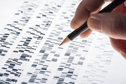 Test genético prenatal: características y ventajas.