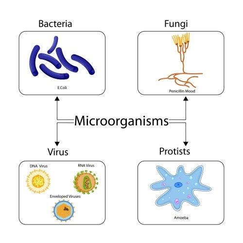 ¿Son los antibióticos eficaces contra los virus?