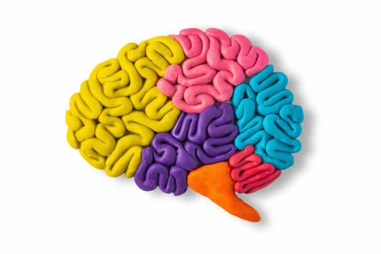 Cómo explicar el funcionamiento del cerebro a niños