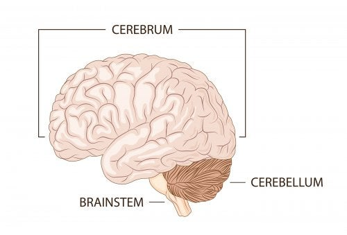 Explicar el funcionamiento del cerebro a niños.